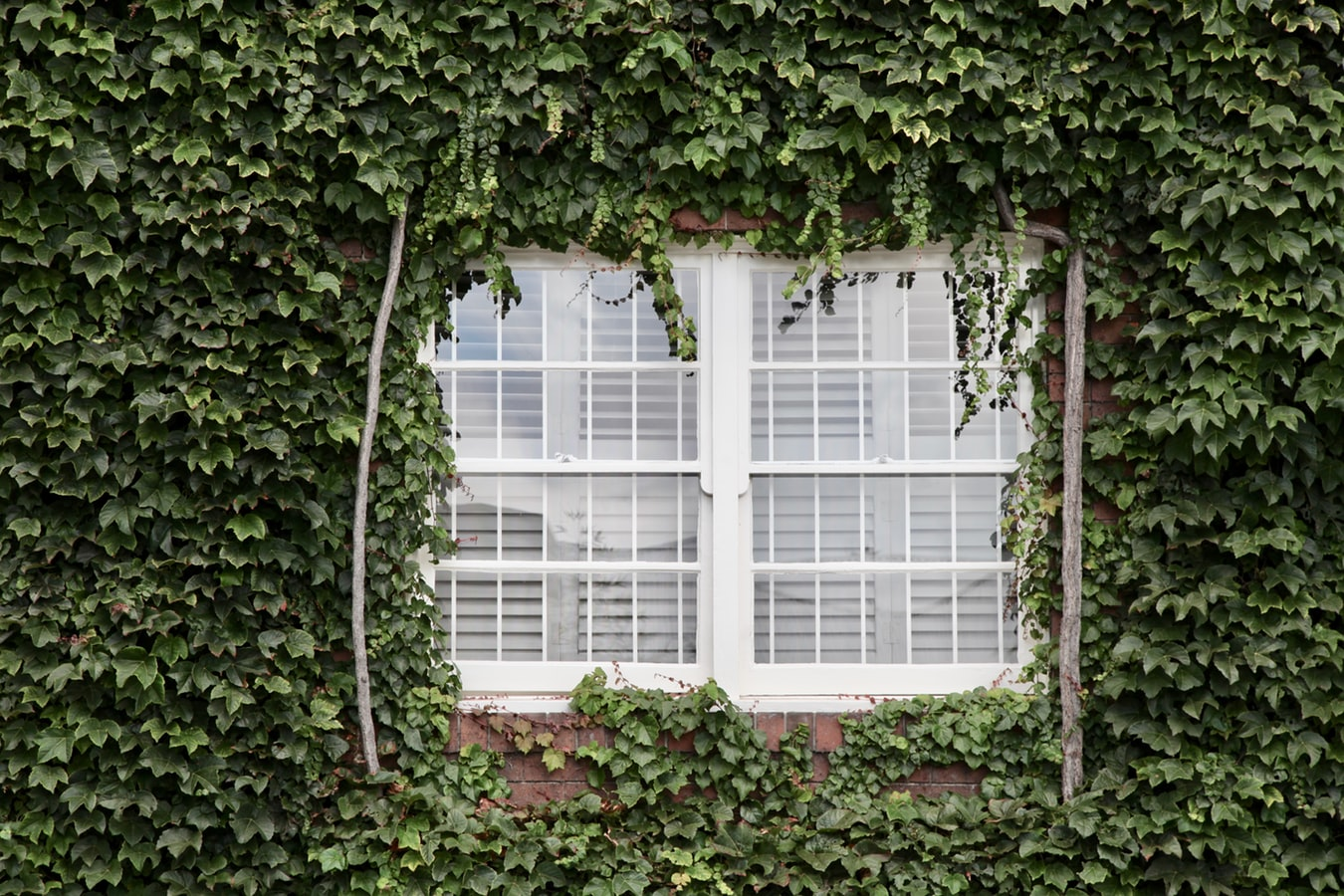 decorated window with plants